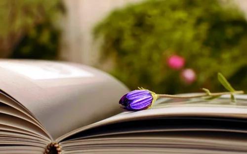 毕业论文里的文献综述怎么写?